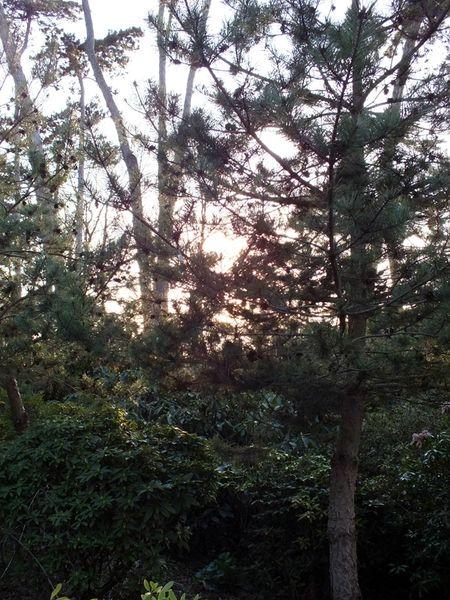 parc-floral-vincennes-printemps-fleurs-jonquilles-magnolias (20)