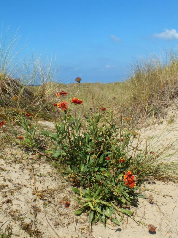 dunes-bretagne-finistere-baie-douarnenez-sainte-anne-la-palud-faune-flore-promenade-sortie-vacances (15)