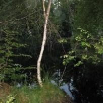 Udsigt over lille skovsø