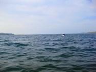Handikappet lystfisker i gummibåd. Respekt til ham!