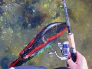 Hornfisk i nettet