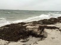 Havet har gnavet godt i østsiden af skansehage.