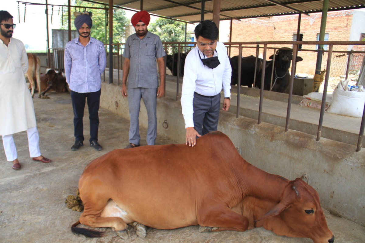 Punjab Govt Reduces Fodder Prices Beneficial For Milk Producers And Farmers: Sachin Sharma