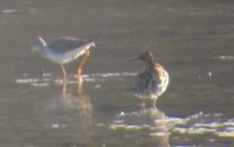 321-01-2012 Ruff 04:16:2012 Somerset Lake, Somerset Co., Mike Lanzone #2 copy