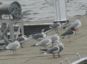 American Oyst ercat cher 10-30-2012 Bucks