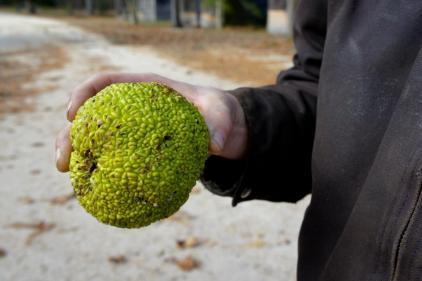 Huge Seed