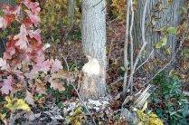 Tasty Tree