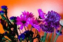 Moar Flowers