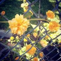Mystery Flower