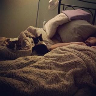 Daniel and the Kitties