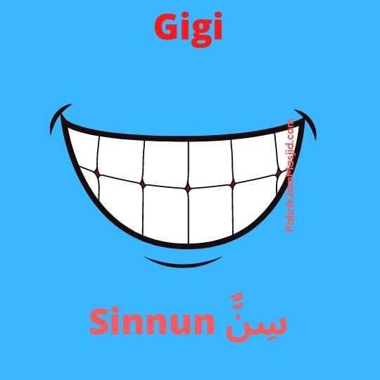 Sinnun artinya gigi bahasa arab