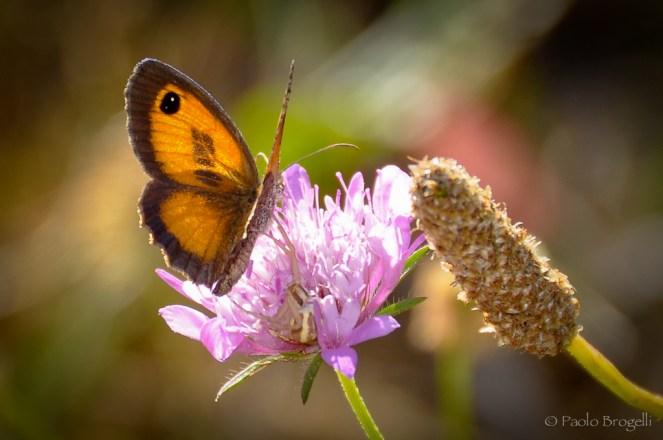 La danza della farfalla 1