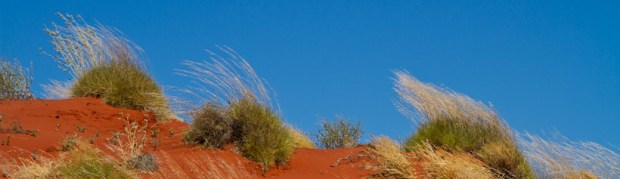 Spinifex blown hard by the winds