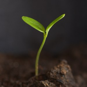 Seedling by Samuel