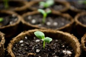 seedlings by Seer Snively