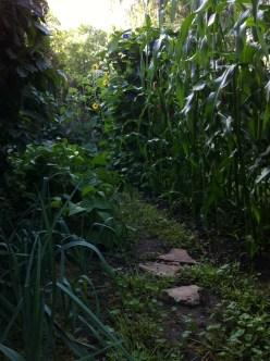 the Hall of Corn and Elderberries