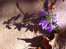 light and shadow in autumn