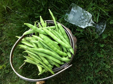 bean picking with a glass of hard cider!