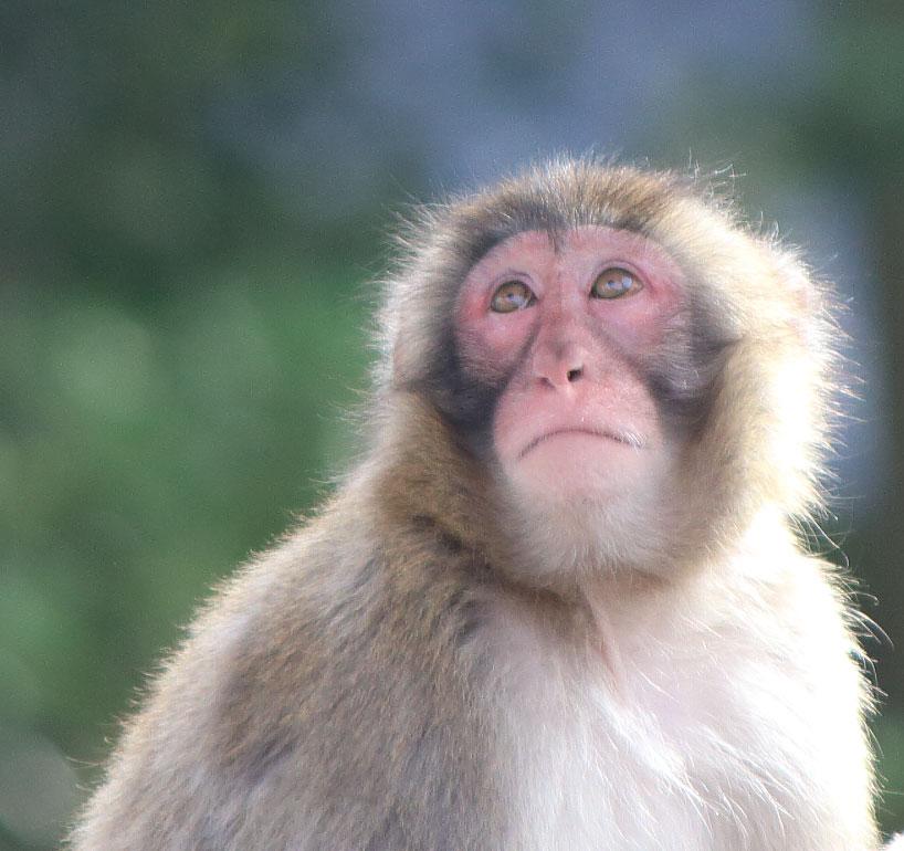 華牌R ~猿渡翔がローズテイルの評価と感想