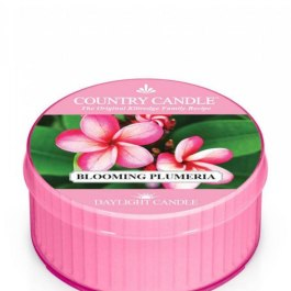 Country Candle Blooming Plumeria Daylight 35g