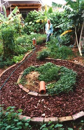 Home garden as polyculture. Annual and perennial vegetables grow with fruit trees and vines. Fiona Campbell and Russ Grayson's one-time garden in Sydney.