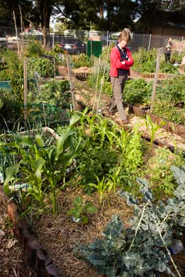 Community food gardens supplement he household food supply. There is potential to scale-up their productivity were a food crisis to eventuate.