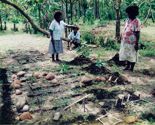 A model in which variables are marked by coconut shells and other found objects is used in planning for food production. Kastom Gaden Association, TerraCircle projects.
