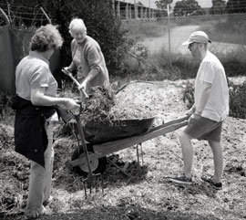 Kelah Lam forks stable sweepings into a wheelbarrow to use as garden mulch.
