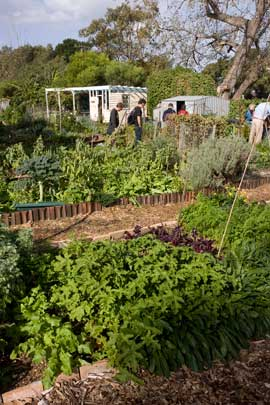 On reaching the Eastern Suburbs, the food trail tour had lunch amid the spaceousness of Randwick Organic Community Garden. The community garden is self-magaged and occupies land owned for the most part by Randwick City Council.