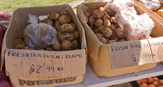 Tasmania's soils grow tremendous potatoes. Here's some freshly dug.