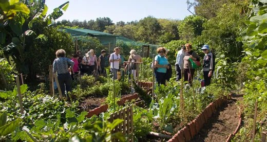 Sydney's frist community garden Glovers Community Garden, made its start in 1985 and has served as a place to visit for Permaculture courses.