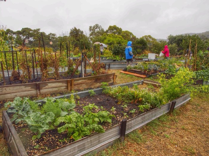 Community gardens — coverage appreciated but quoting misses much