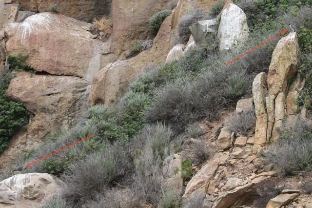 peregrine, juvenile, Morro Rock