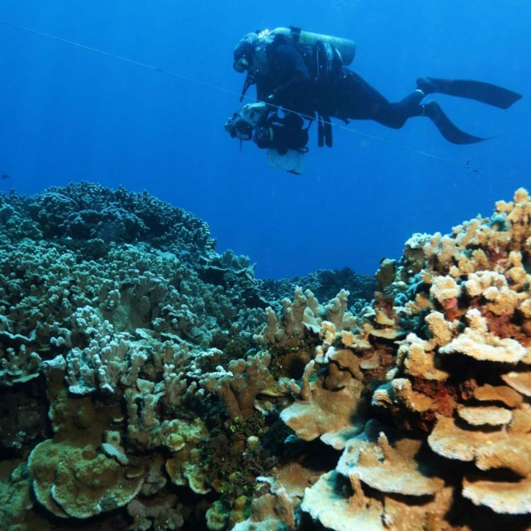 JIMAR research diver capturing 3D images of reef structures. (Photo credit: Ray Boland)