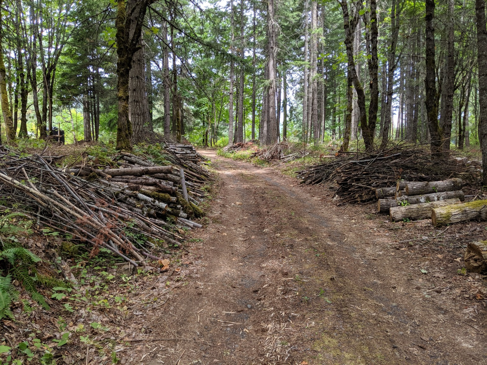 logging at Pacific Hermitage
