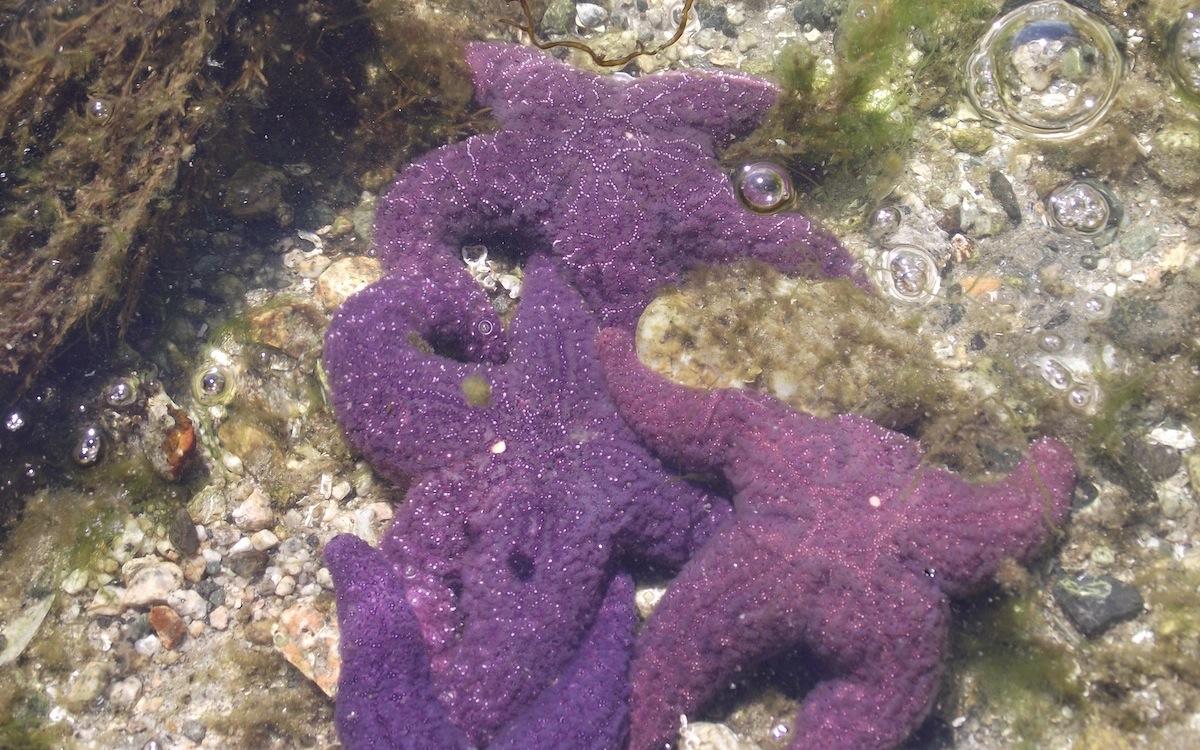 starfish in the ocean