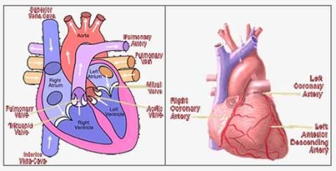 heart-chart