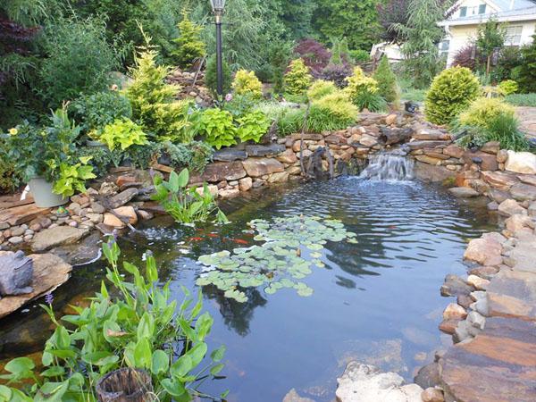 Pond Construction - Backyard Koi Pond Design Examples ... on Backyard Koi Pond Designs  id=24113