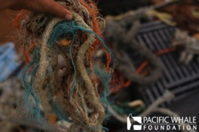 A tangle of plastic fishing lines collected during one of PWF's harbor clean ups