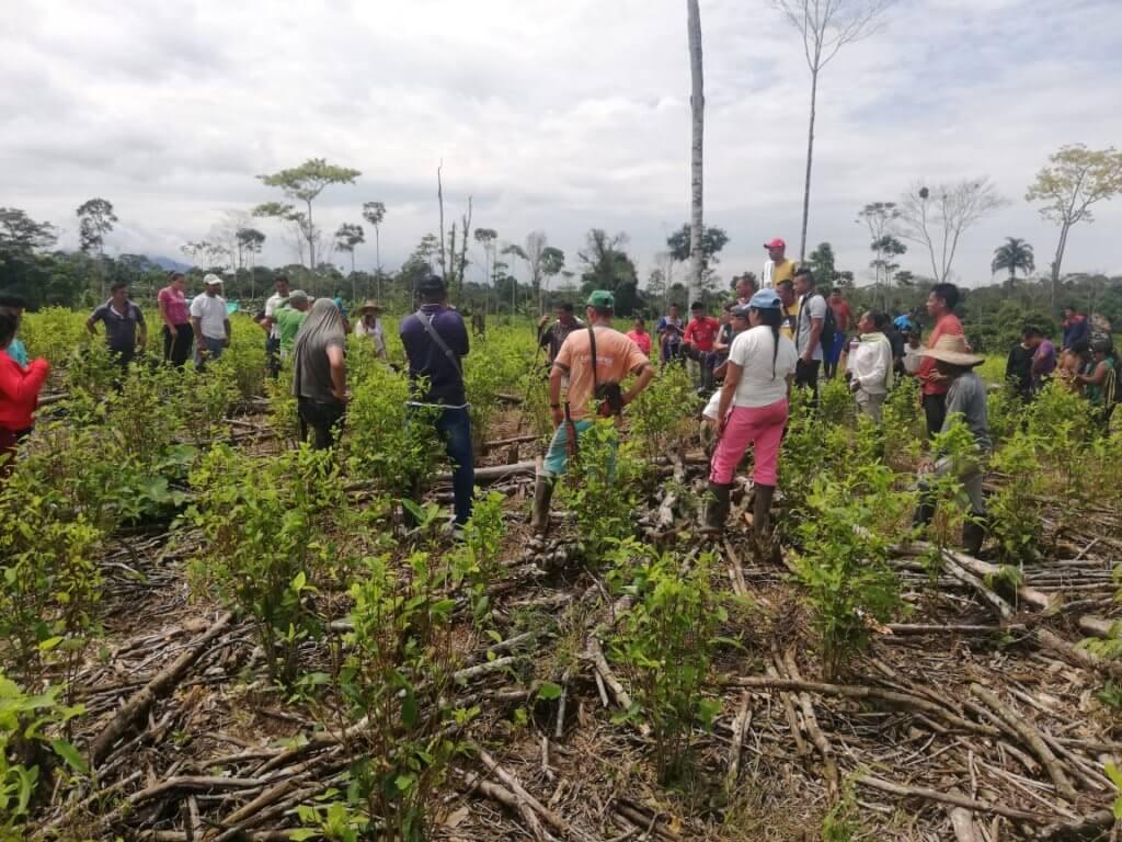 Erradicación jardines de sucumbios ipiales 2