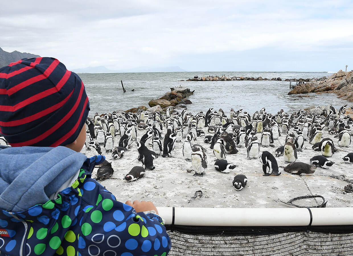 Stonypoint Penguins Reserve