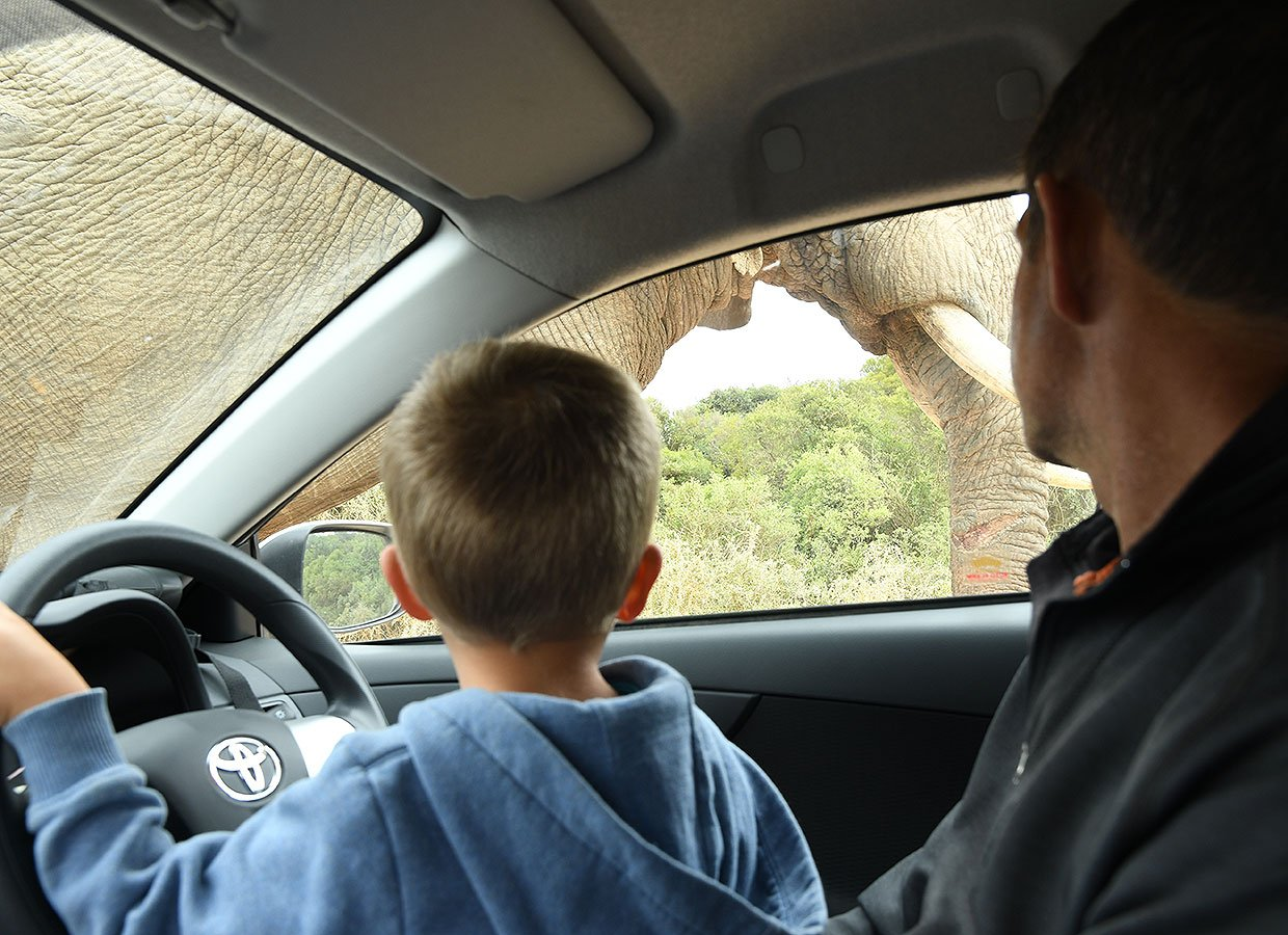 Game viewing whilst on a self drive in the Addo