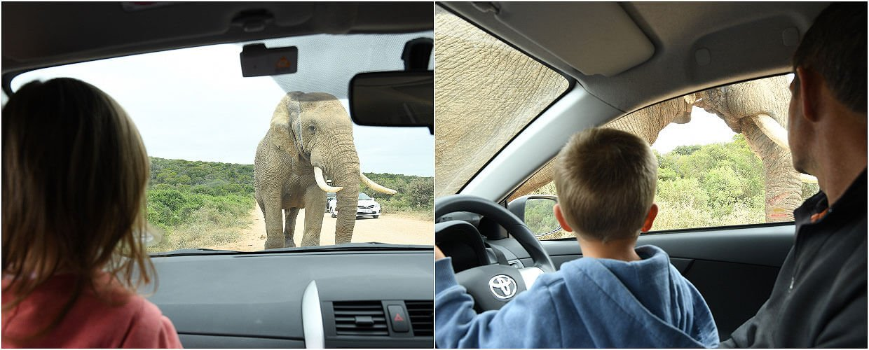 Elephants at the Addo Elephant Park