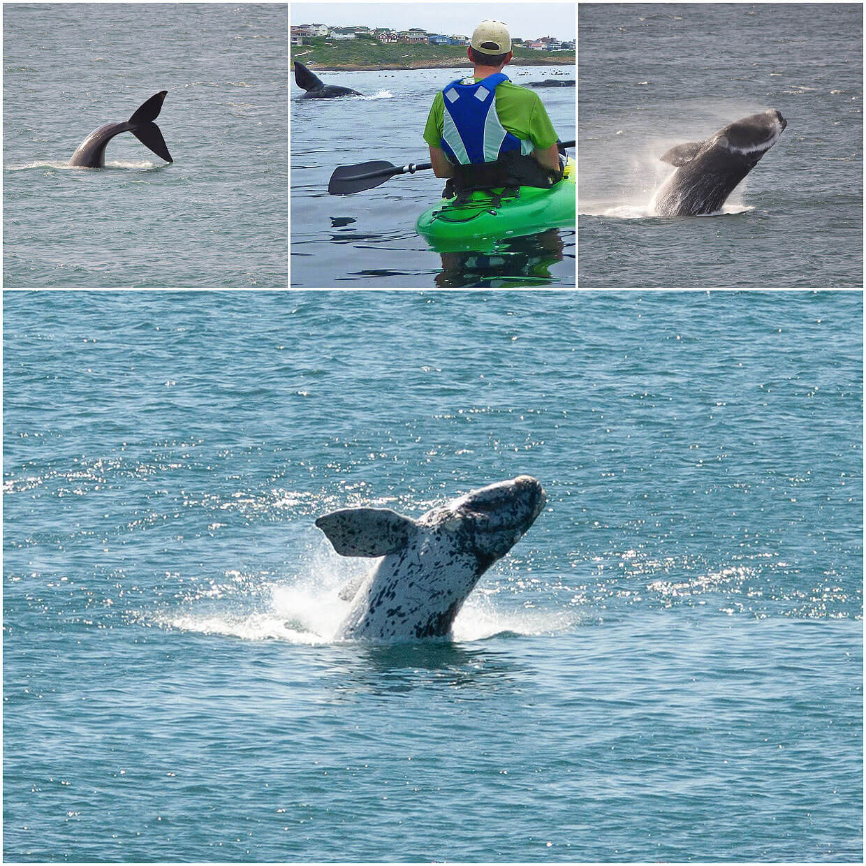 Amazing Whale encounter at Gansbaai