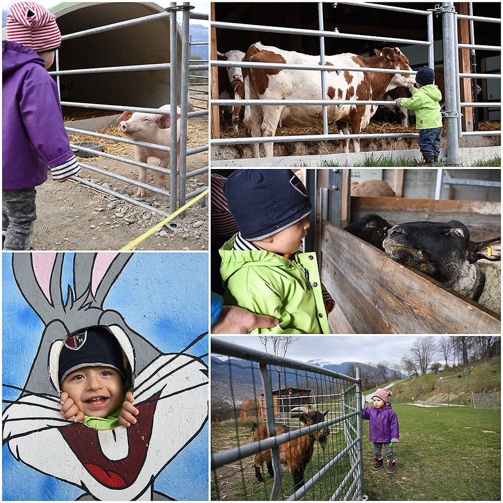 Visit the Animal farm L'arche de Cretillon