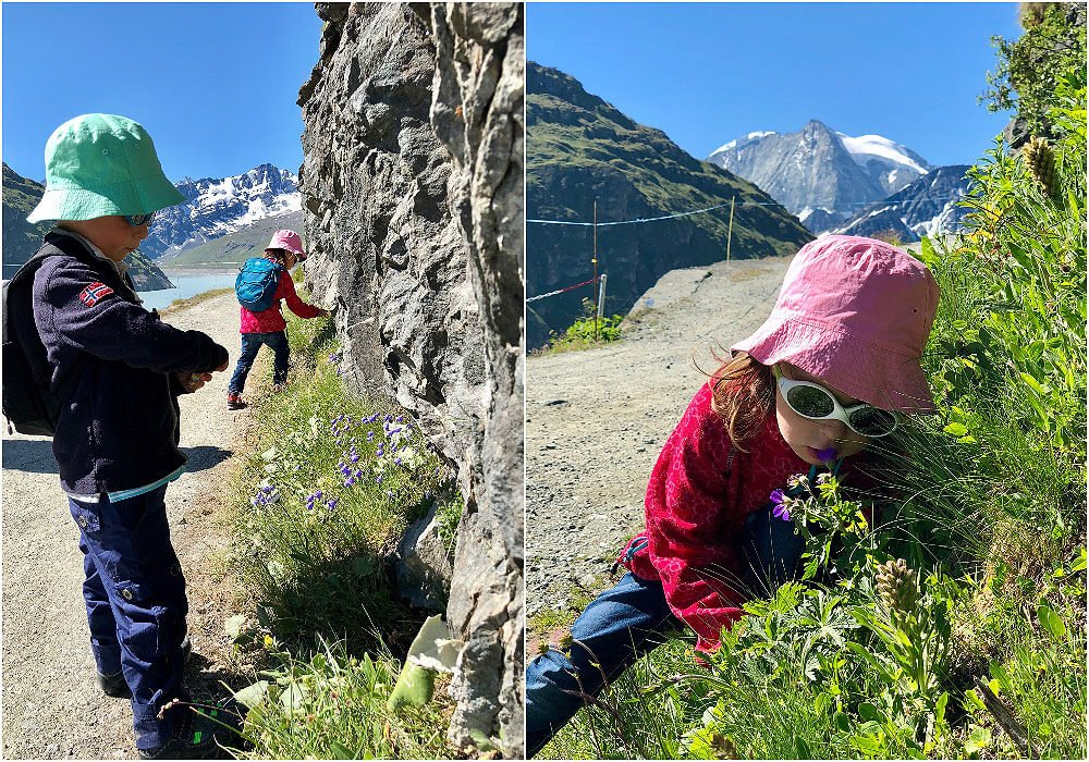 Kids exploring the alpine Flowers
