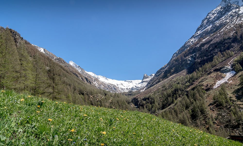 spring picture of the valley Ferpècle in Valais with Dent Blanche in the back