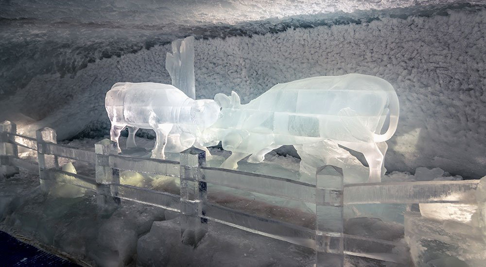 Herens cows fighting made out of ice