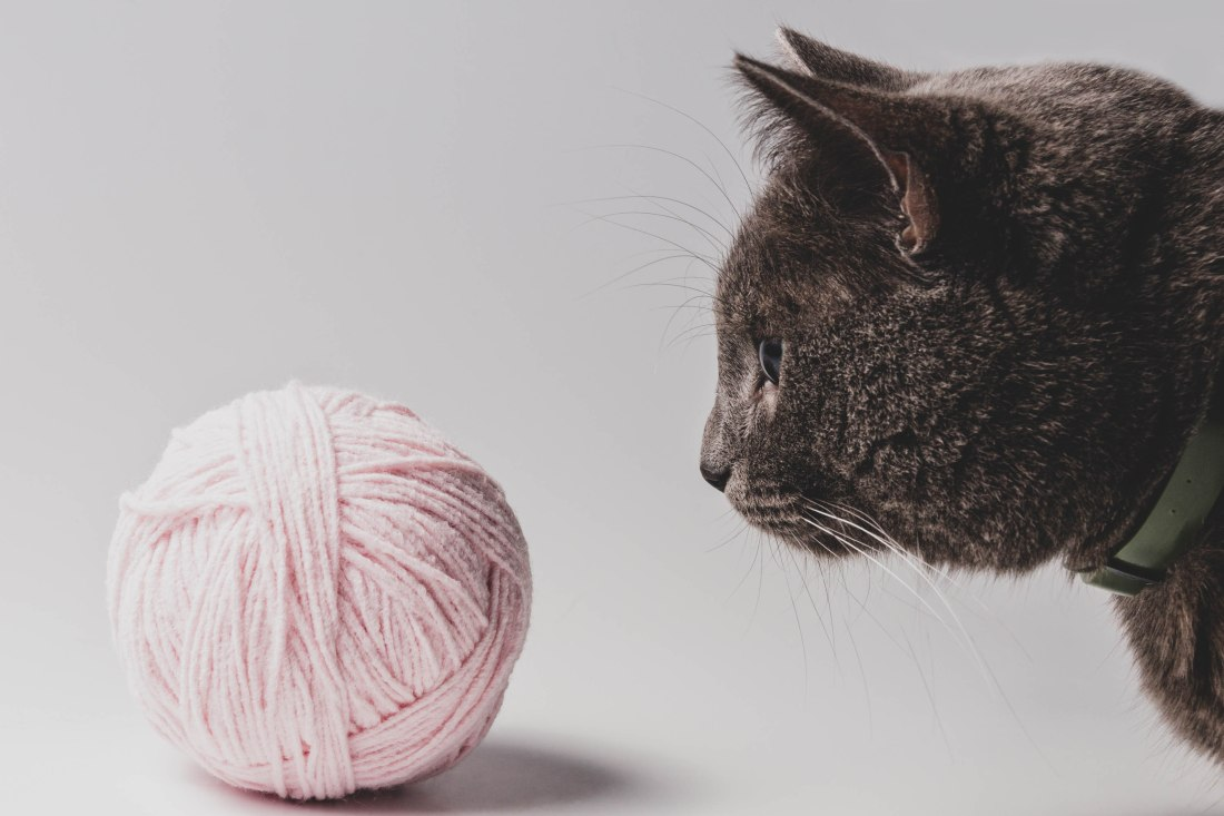 cat and a ball of yarn