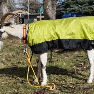 Goat Coat (Goat Coat)